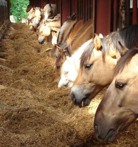 Paarden bij Manege van Loon