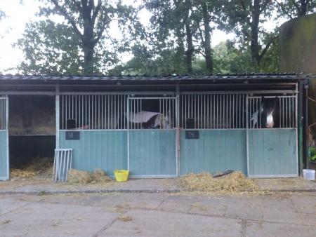 Paardenboxen_1
