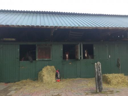 Paardenboxen_2