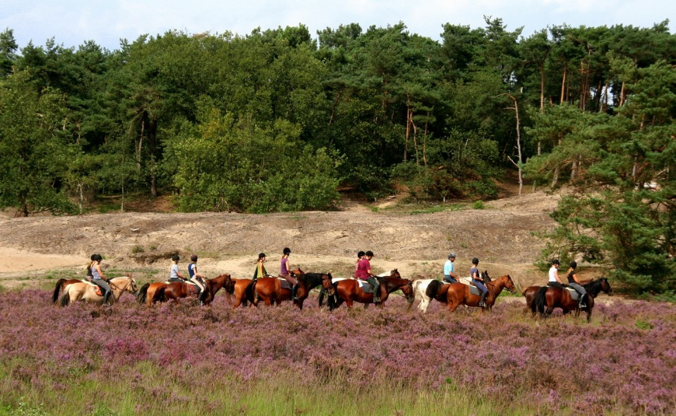 ruiters in de loonse en drunense duinen door martha kivits