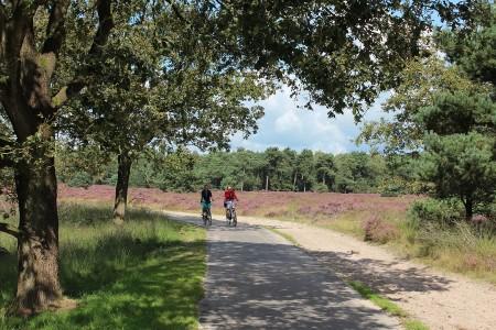 fietsen-in-de-duinen